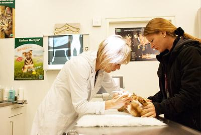 tierarztpraxis_seepark_impfung1